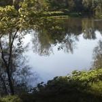 ribniki
